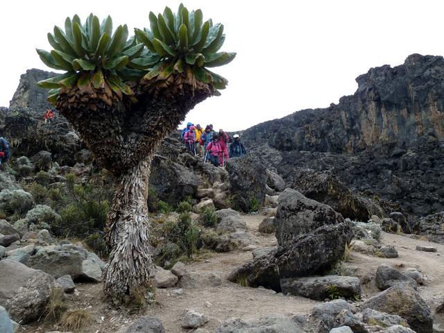 摩訶不思議な植物