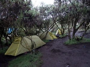 マチャメキャンプ