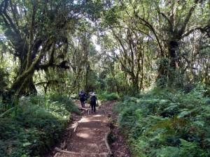 熱帯雨林の樹林帯